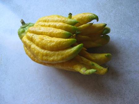 Buddha's Hand Citron #2: