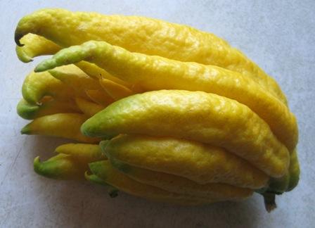 Buddha's Hand Citron #3: