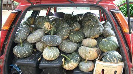 a few pumpkins: