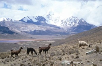 altiplano view.jpg: