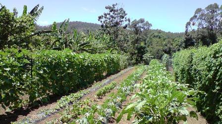 country garden: