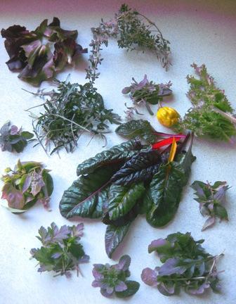 foraged: