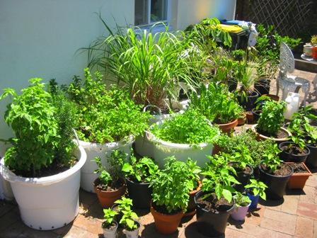 garden in spring:
