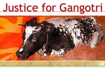 justice for Gangotri: