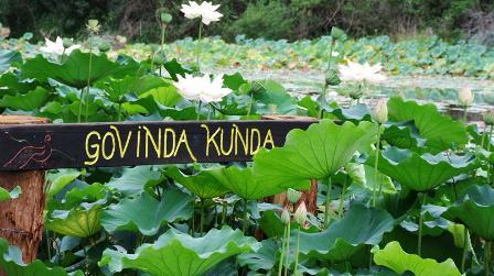 lotus lake: