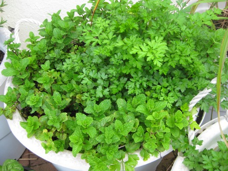 parsley and mint: