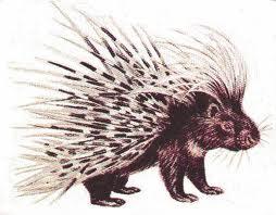 porcupine: